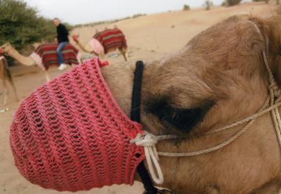 砂漠の極上リゾート!アルマハ in ドバイ!