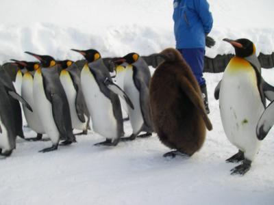 冬の旭山動物園 ~ペンギンのお散歩が見たい!~