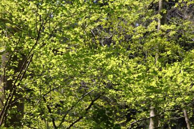 新緑の高尾山 ハイキング&森林浴の旅
