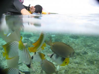 2010年4月 11年ぶりのロタ島