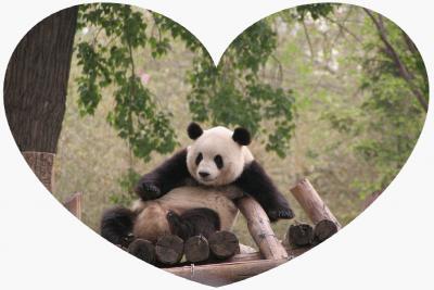 パンダに会いに中国へ 2010.4 上海動物園・安吉竹博園・北京動物園