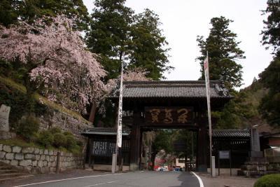 2010 身延山久遠寺の枝垂れ桜(その4)