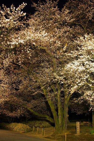 身延山からの帰りに見つけた甲州蚕影桜