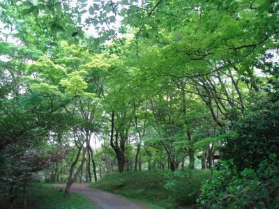 プチ旅~愛知県森林公園をお散歩
