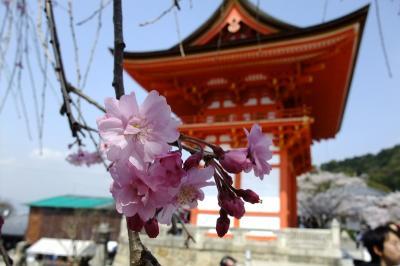 京都ぶらり(引越記念)