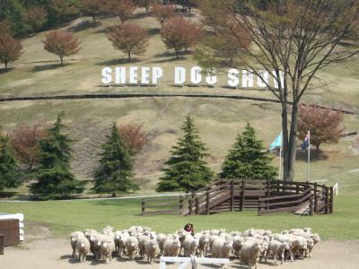 イイ天気!GWの伊香保温泉② ~『伊香保グリーン牧場』SHEEP DOG SHOW編~