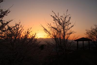 独り占めできた小山城跡の桜