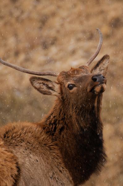 ロッキーマウンテン国立公園の四季