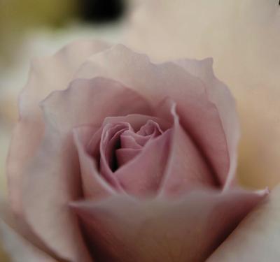 Japan 国際バラとガーデニング・ショー 薔薇  ~ミツバチばあやの冒険~