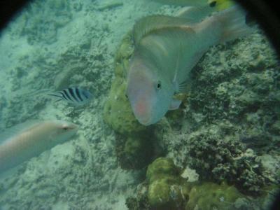 初めての水中カメラ in グアム