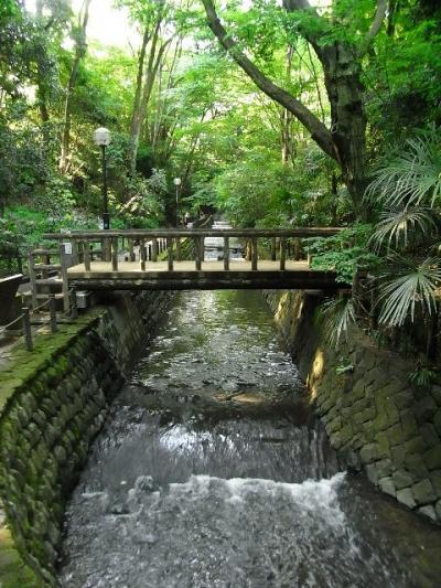 東京、世田谷の真ん中に喧騒を遠ざける素敵な森を味わう。等々力渓谷散歩