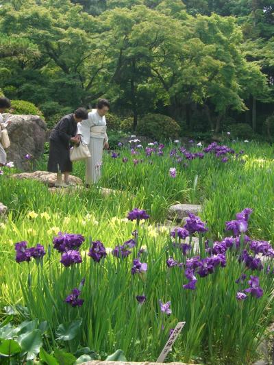 桑名の諸戸氏庭園で菖蒲鑑賞
