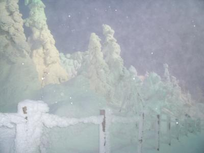 念願の樹氷