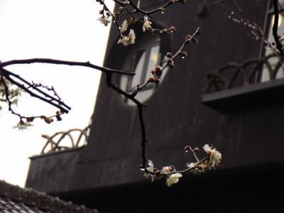 ある雨の昼下がり。梅を観に朝倉彫塑館へ。