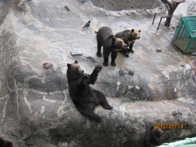 大好きなクマ牧場!