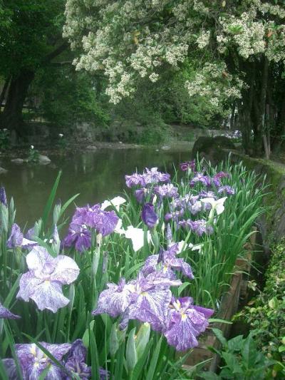 緑あふれる水前寺成趣園をひとめぐり