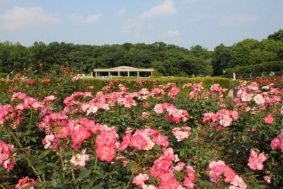 神代植物公園のバラと深大寺