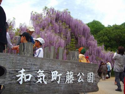 晴れの国・岡山花の旅!(日本一の和気ふじ園)