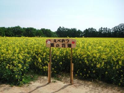 滝川へ菜の花畑を見に行ってきたぜよっヽ(・◇・´)ノ