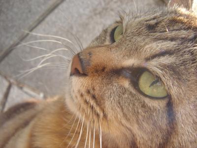 猫と江ノ島とフィッシング