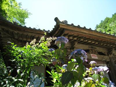 三光寺のアジサイ