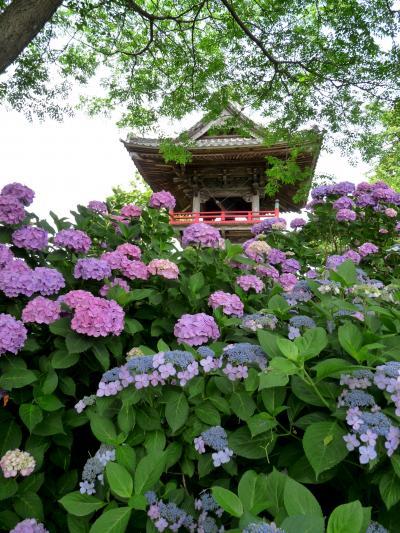 熊谷のあじさい寺 能護寺