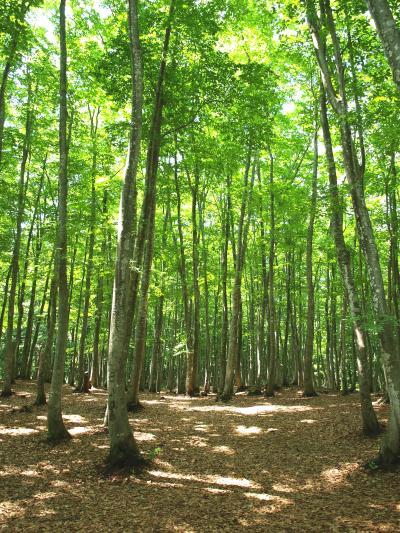 「 美 人 林 & 翠 の 湯 」 の小さな旅 < 新潟県十日町市 >