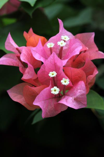 ひとり旅巡行記 [742] ゆり・らん・アジサイの花を乱写♪してきました。≪とっとり花回廊 フラワードーム≫鳥取県南部町