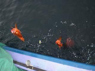安房丸釣日記2010-7