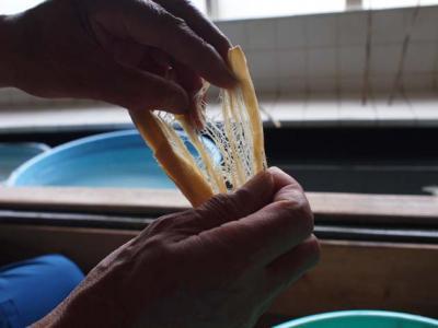 手漉き和紙職人訪問  (4) 越前和紙・九代目岩野市兵衛 - Echizen-city, Fukui pref.