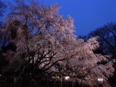 駒込は六義園にて枝垂れ桜に見とれた。