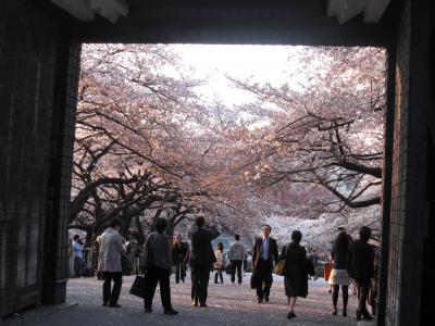 桜の千鳥が淵