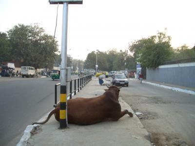 2004 1202-1203(Delhi)