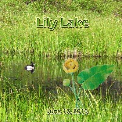 2010 コロラド紀行: Lily Lake  リリー レーク
