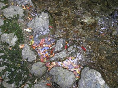 2003年11月22~24日熊野 その2(瀧原宮1)