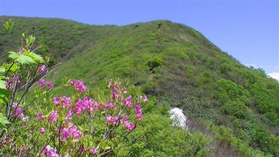 2010初夏:禿(かむろ)岳1261.7m 「あっという間に見事なブナ林に突入!!」