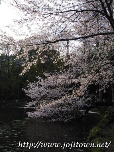 吉祥寺界隈(2010.4.1.~4.13)