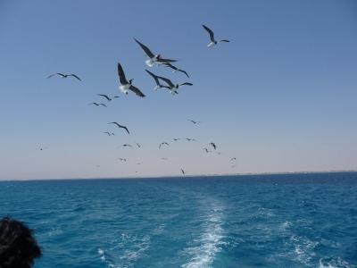 2009 08 エジプト 紅海にあるハルガダ