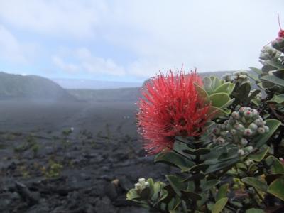 かいけ一家のハワイ島旅行記