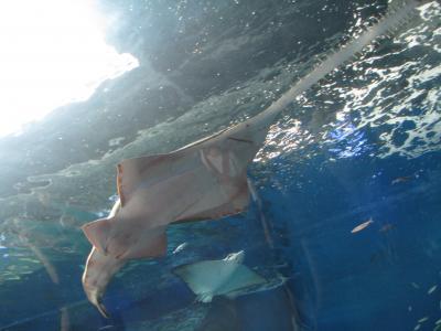 夏は涼しく駅近室内水族館でマンタ~エプソン品川アクアスタジアム~