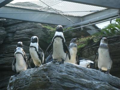 サンシャイン国際水族館ありがとうフェスタ&こびとづかん♪♪