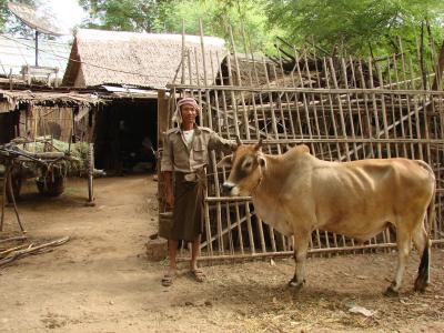 ミャンマーの旅 マグウェイ(Magway)