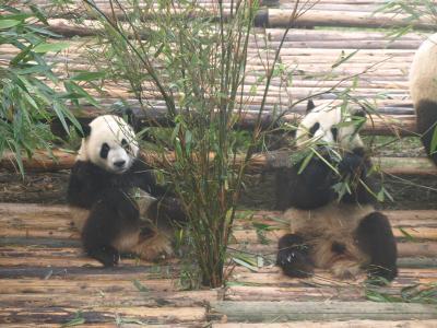 パンダ・PANDA・熊猫