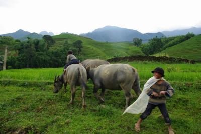 初ベトナム (1) 少数民族が見たい。サパへ