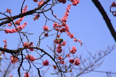 京都めぐり・2010春★清水寺・成就院~知恩院
