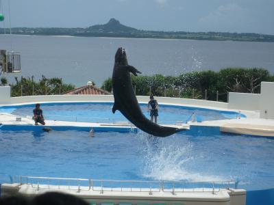 イルカにびっくり