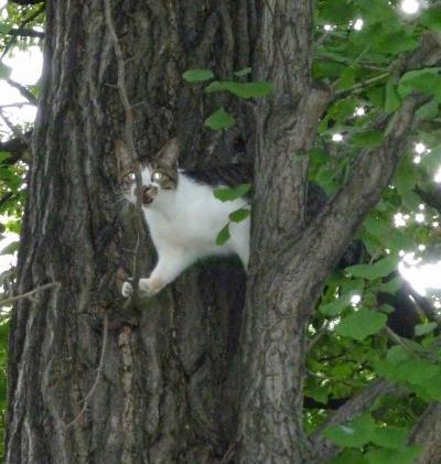 子猫ちゃん、木下り脱出の顛末記