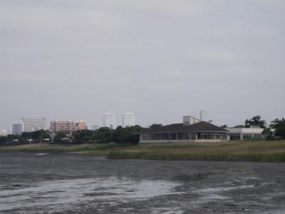 東京湾のバードウォッチング①谷津・行徳