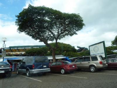 ☆ハワイの旅 2010 (5日目)