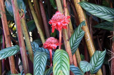 パプアニューギニアの旅 6・・旅いつまでも・・